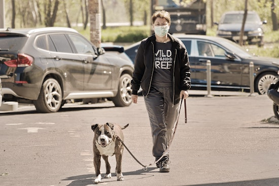 Walking dog with facemask